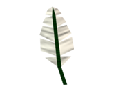 Feather [RS3] x 50 000